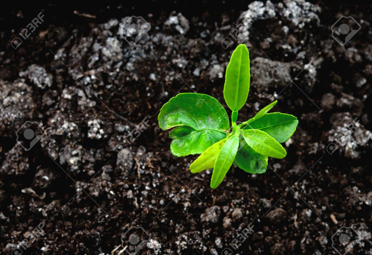 seedling green plant surface top view textured background - 32540363
