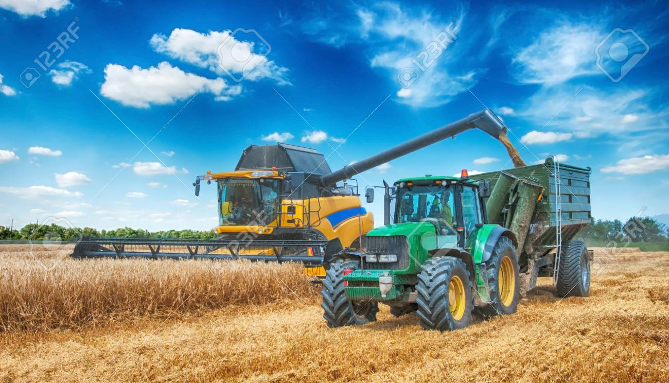 combine harvester working on a wheat field - 82819328