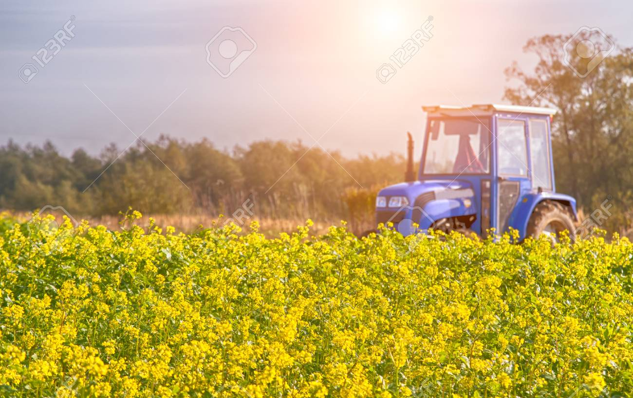 tractor in mid of the canola field - 88341844