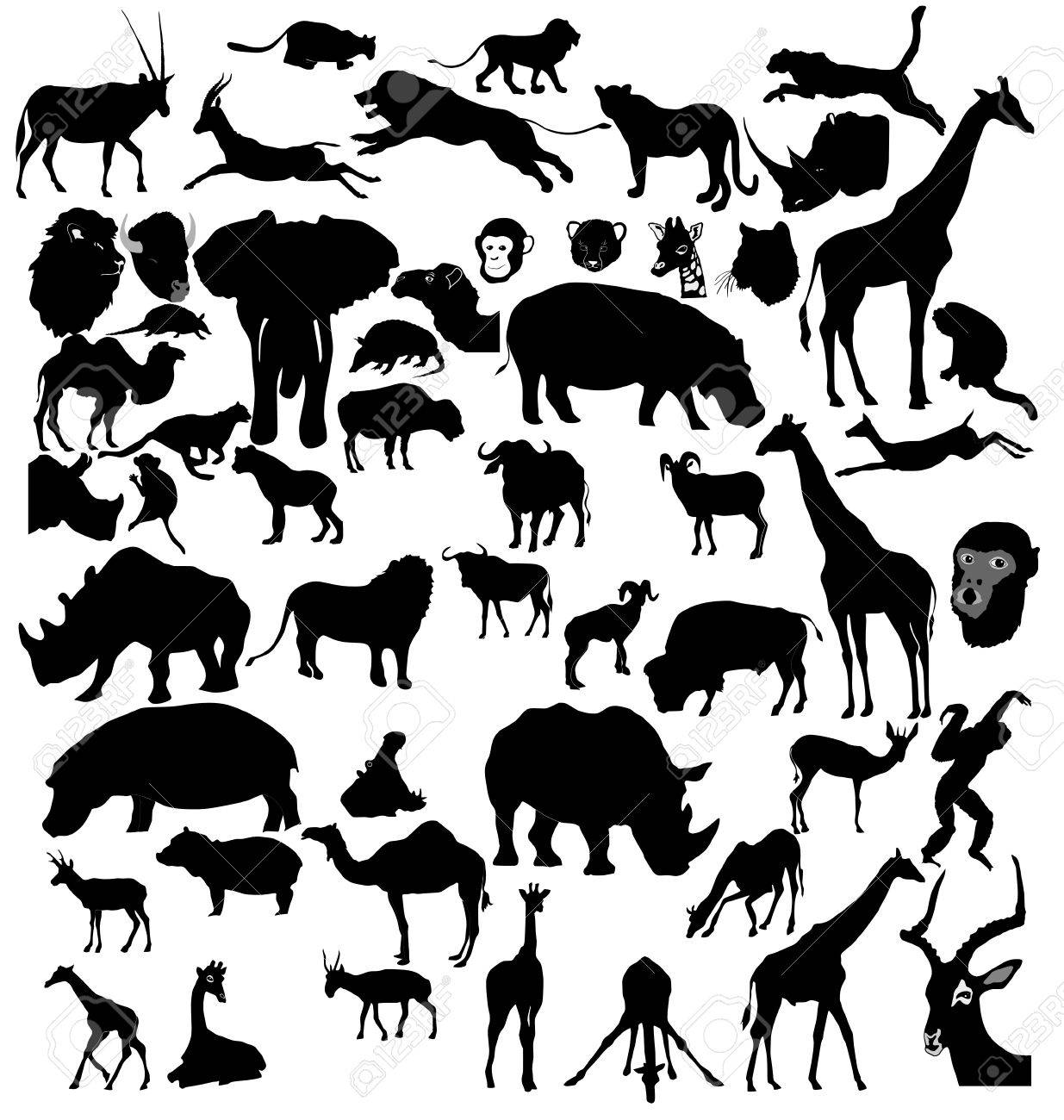 Big set of African and tropical animals Stock Vector - 11234795