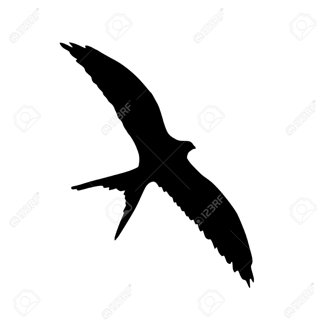 Illustration in style of black silhouette of flying swallow Stock Vector - 11611384