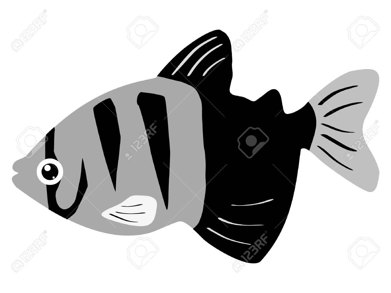 One colored illustration of a aquarium fish Stock Vector - 11611505