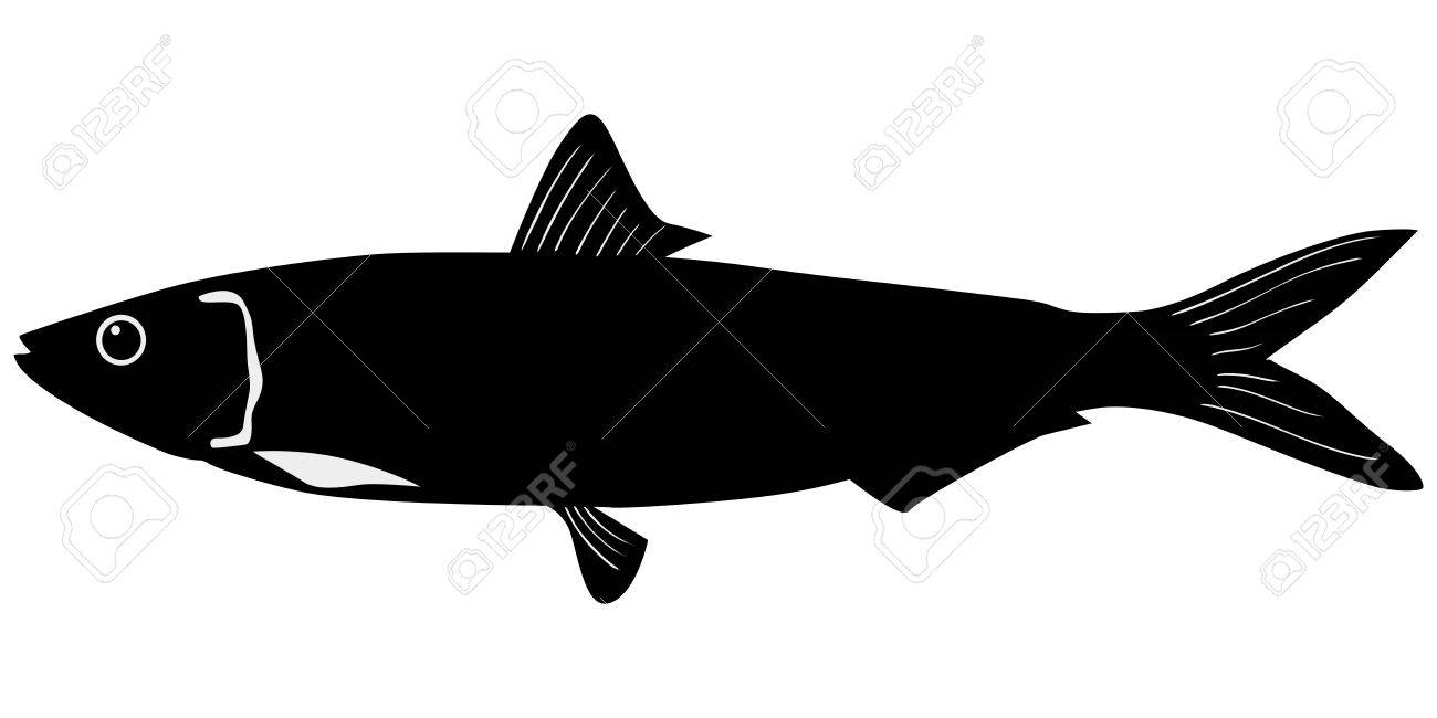 silhouette of the sardine on white background Stock Vector - 15786550