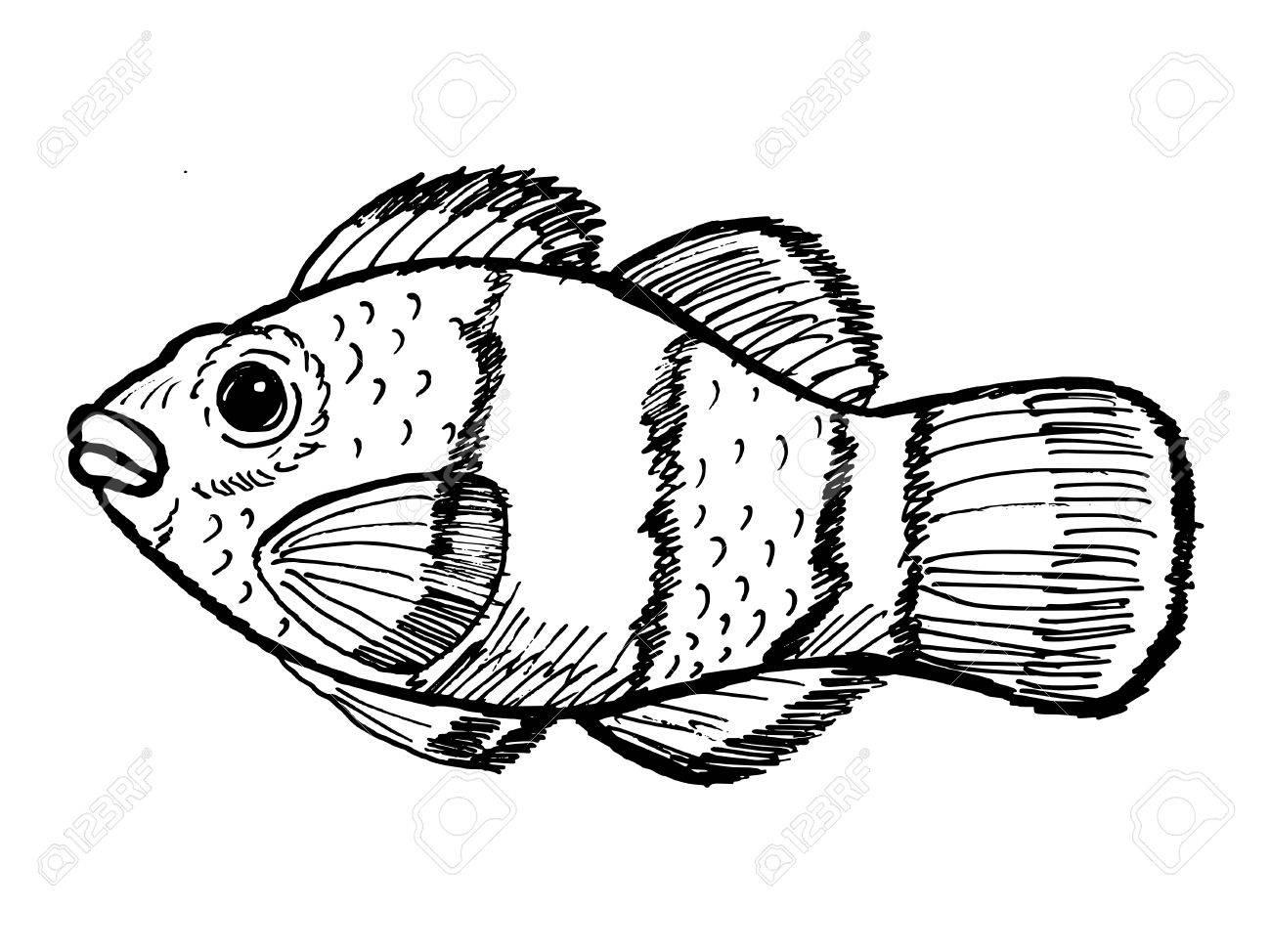 Hand Drawn Sketch Cartoon Illustration Of Clown Fish Royalty Free