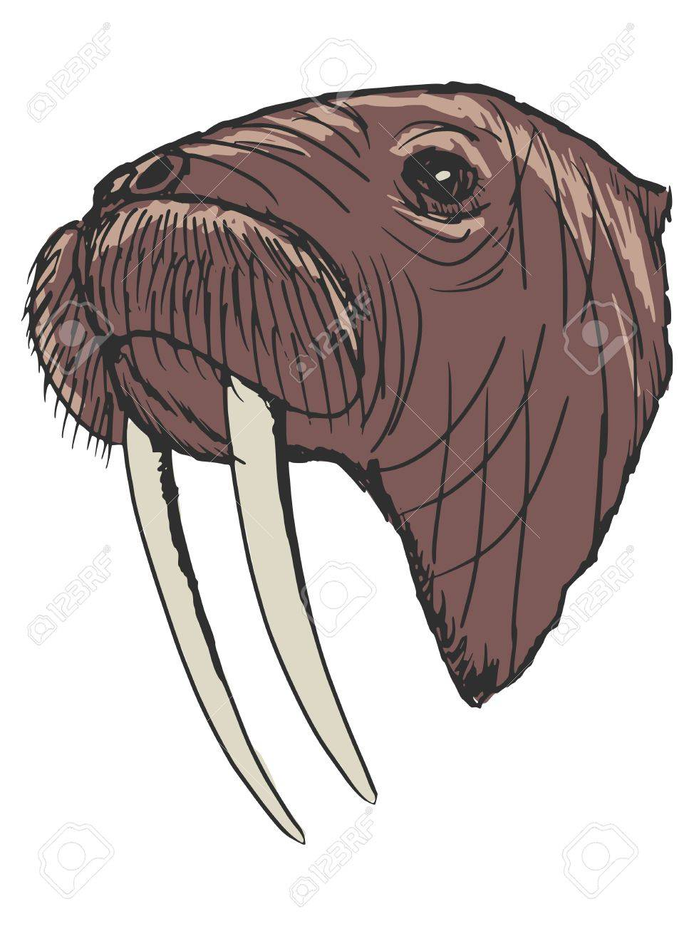 hand drawn sketch cartoon illustration of walrus royalty free