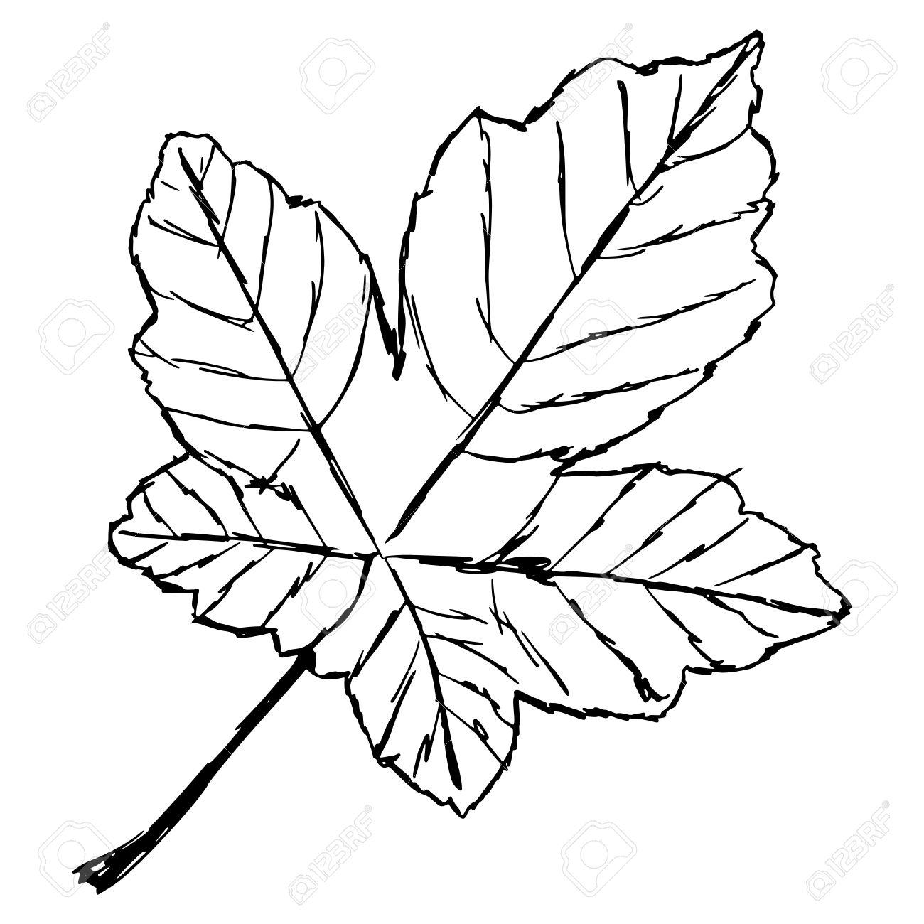 Uncategorized Drawn Leaf hand drawn sketch cartoon illustration of yellow leaf royalty stock vector 28095392
