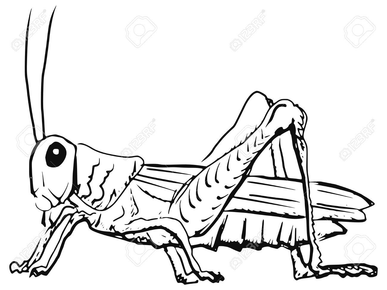 grasshopper clipart black and white. cartoon hand drawn illustration of grasshopper stock vector 28795562 clipart black and white