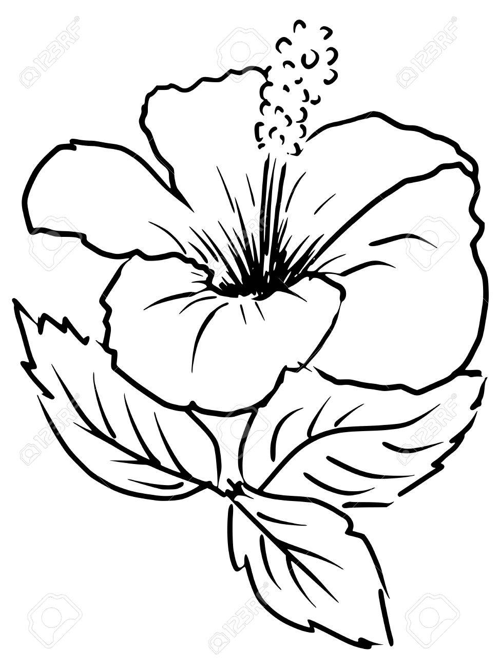 Sketch Cartoon Illustration Of Hibiscus Royalty Free Cliparts