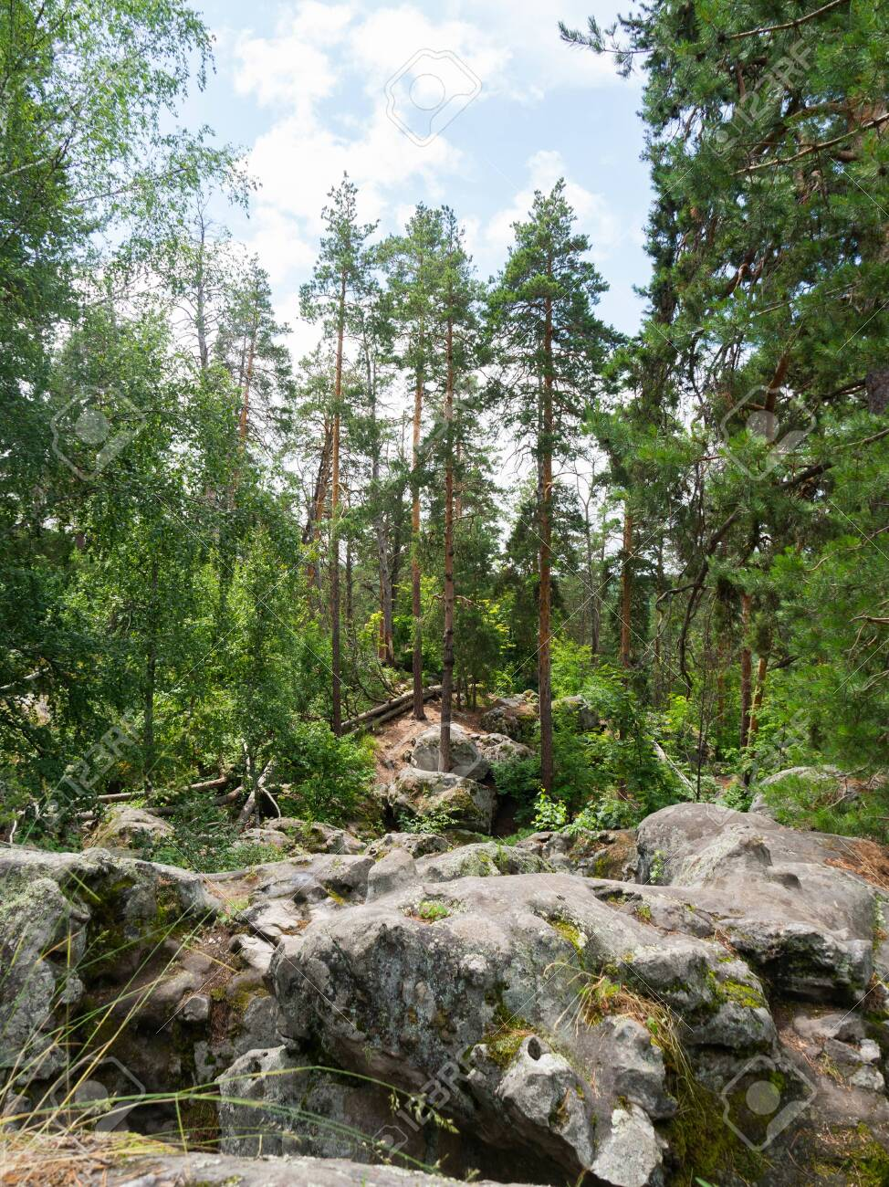 Beautiful round stones in a relic pine forest. Lime cobblestones in stone forest. Traveling in Russia. - 150177654