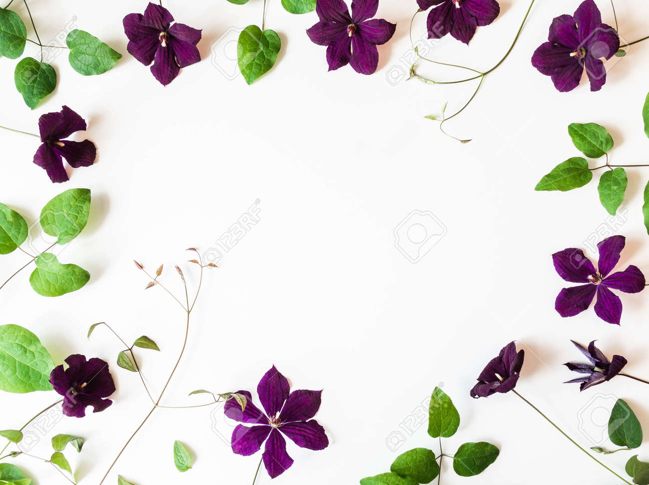Frame of purple clematis flowers and leaves isolated on white. Top view. Copy space - 150623906