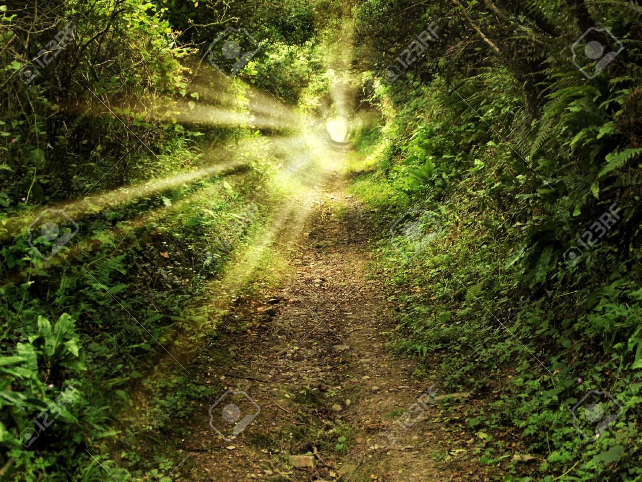 Tunnel -like path covered with bushes and trees with light at the end Stock Photo - 12889187
