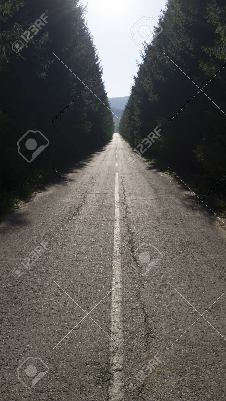 A straight asphalt road disappearing into the distance between lines of trees Stock Photo - 16187863