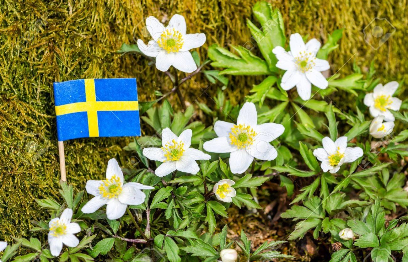 Wild spring flowers in swedish forest stock photo picture and stock photo wild spring flowers in swedish forest mightylinksfo