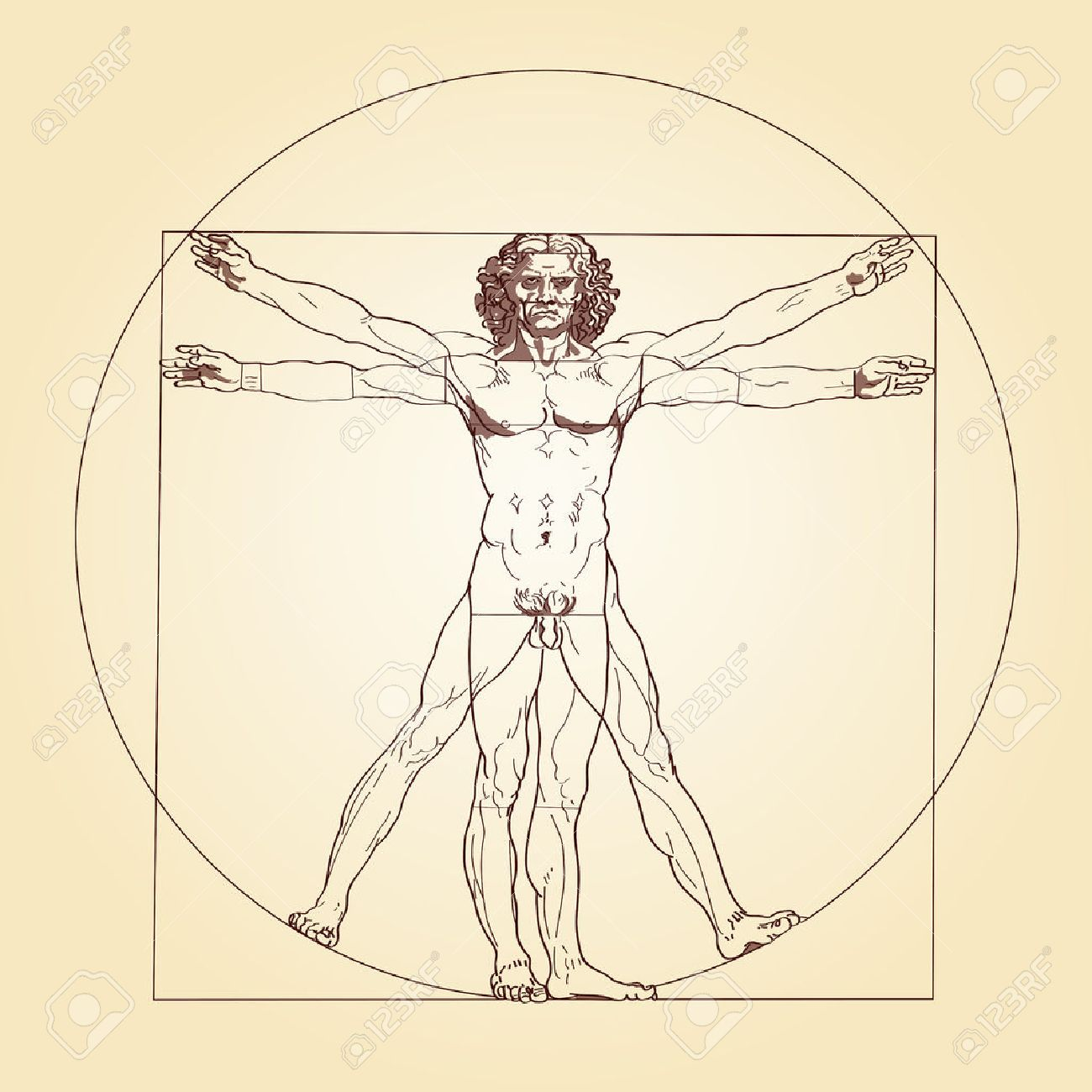 Illustration Of The Vitruvian Man Based On The Records Of Leonardo