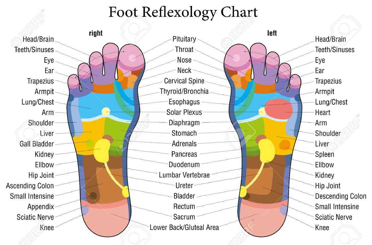 Foot reflexology chart with accurate description of the foot reflexology chart with accurate description of the corresponding internal organs and body parts vector illustration ccuart Image collections