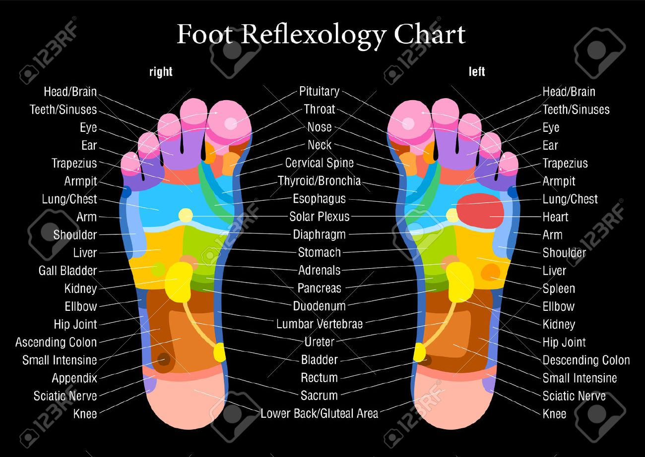 Foot reflexology chart with accurate description of the banco de imagens foot reflexology chart with accurate description of the corresponding internal organs and body parts ccuart Image collections