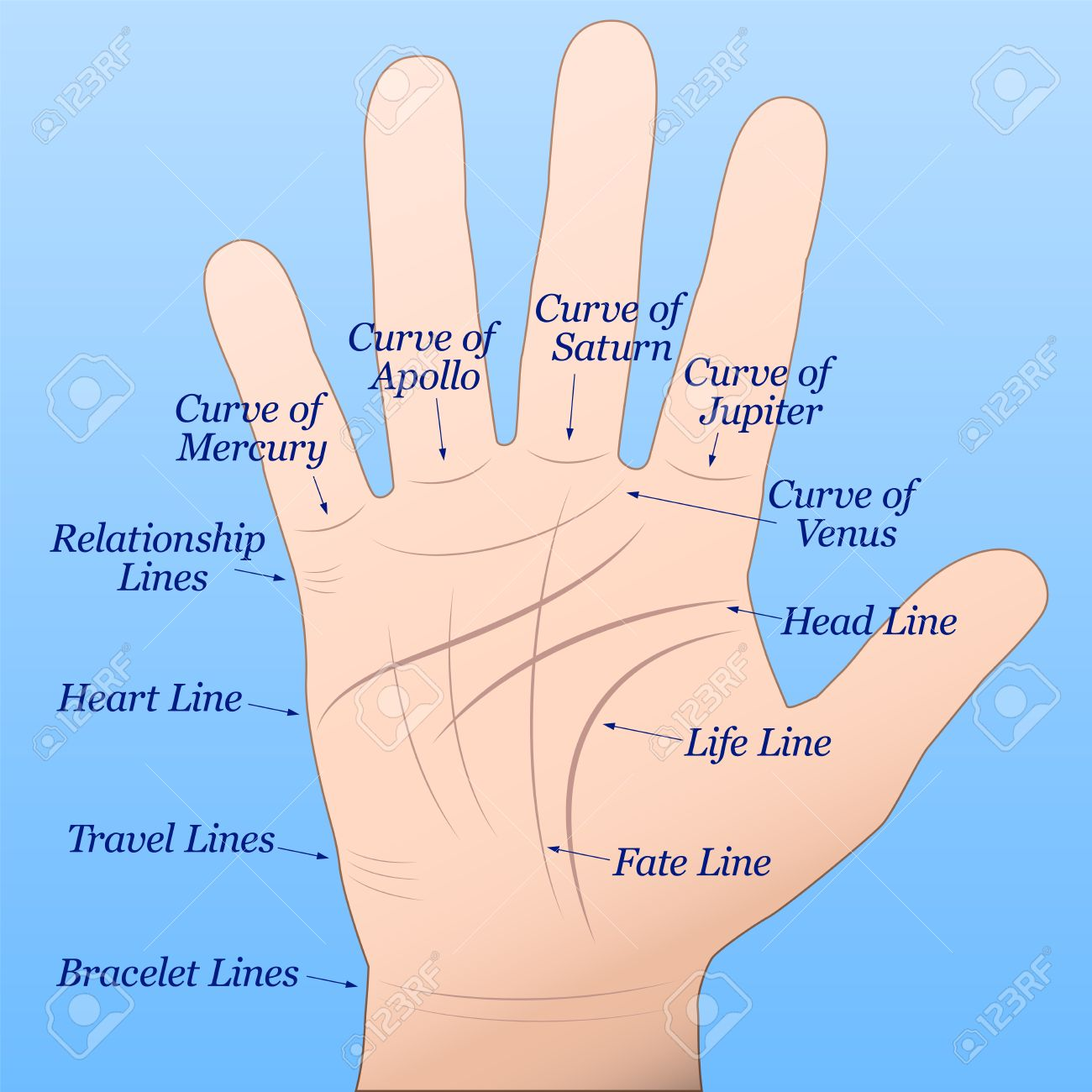 Palmistry - Right hand with lines and their names Stock Vector - 29306728