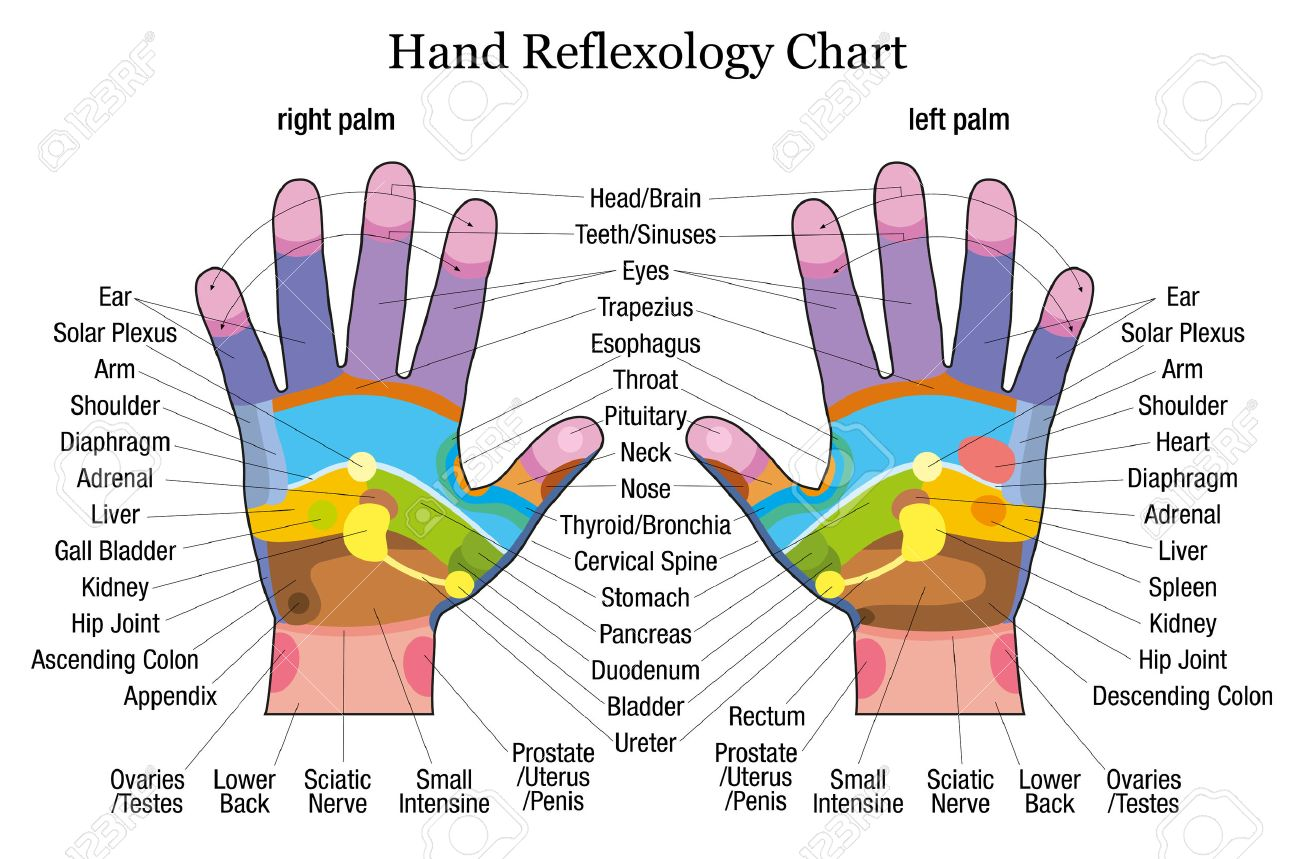 Colour therapy for stomach - Colour Therapy Hand Reflexology Chart With Accurate Description Of The Corresponding Internal Organs And Body