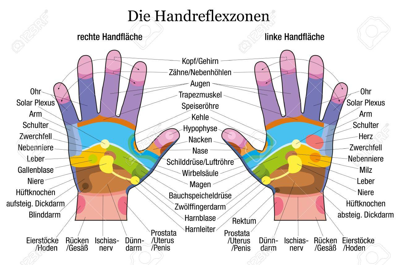 Handreflexzonentabelle Mit Genauer Beschreibung Der Entsprechenden ...