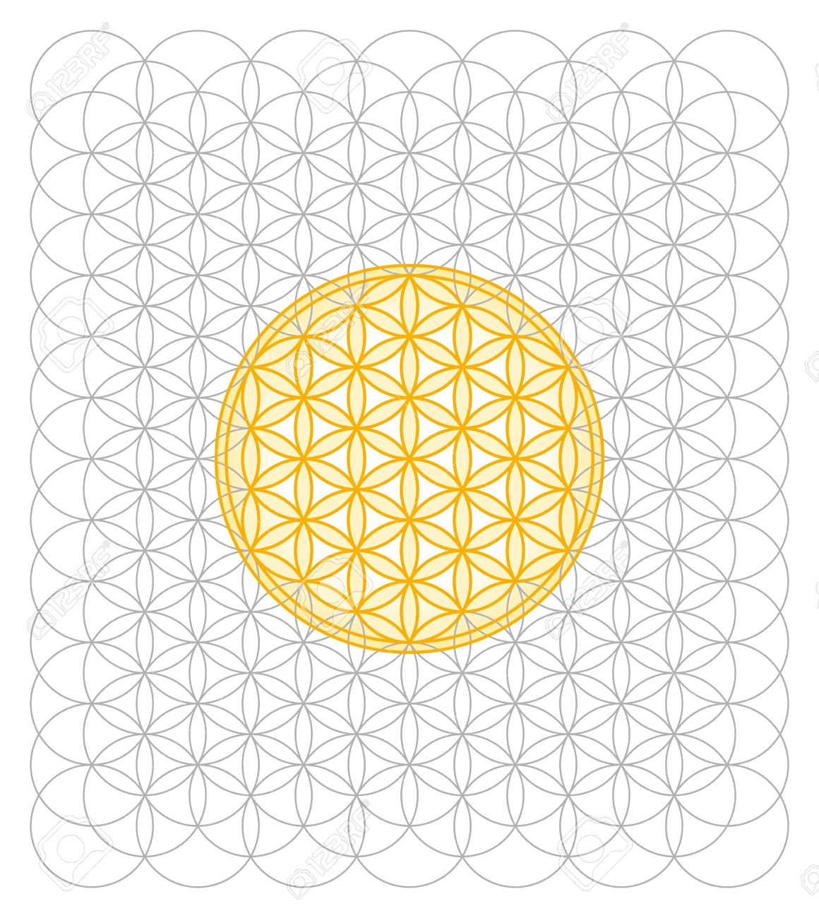 Development of Flower of Life from a sea of circles  Sacred geometry