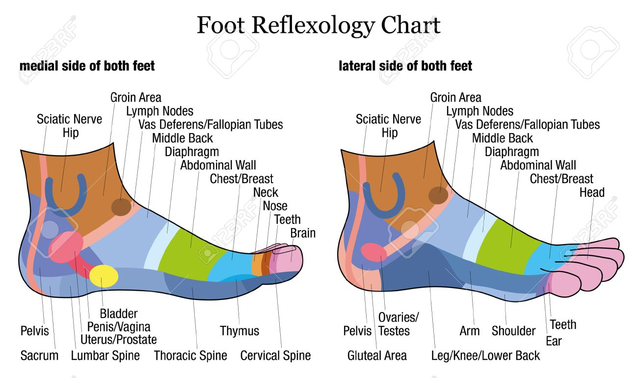Foot reflexology chart medial inside and lateral outside view of foot reflexology chart medial inside and lateral outside view of the feet ccuart Image collections