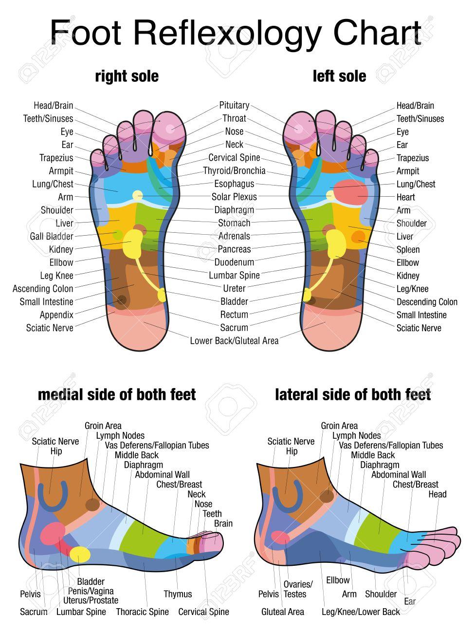 Reflexzonen Der Füße - Sohlen Und Seitenansichten - Genaue ...