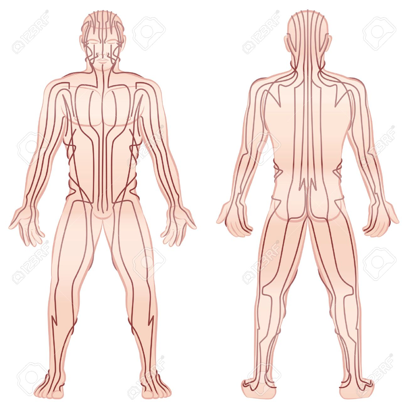 Meridians - meditating man with main acupuncture meridians - front view, back view - Isolated illustration on white background. Standard-Bild - 52544550
