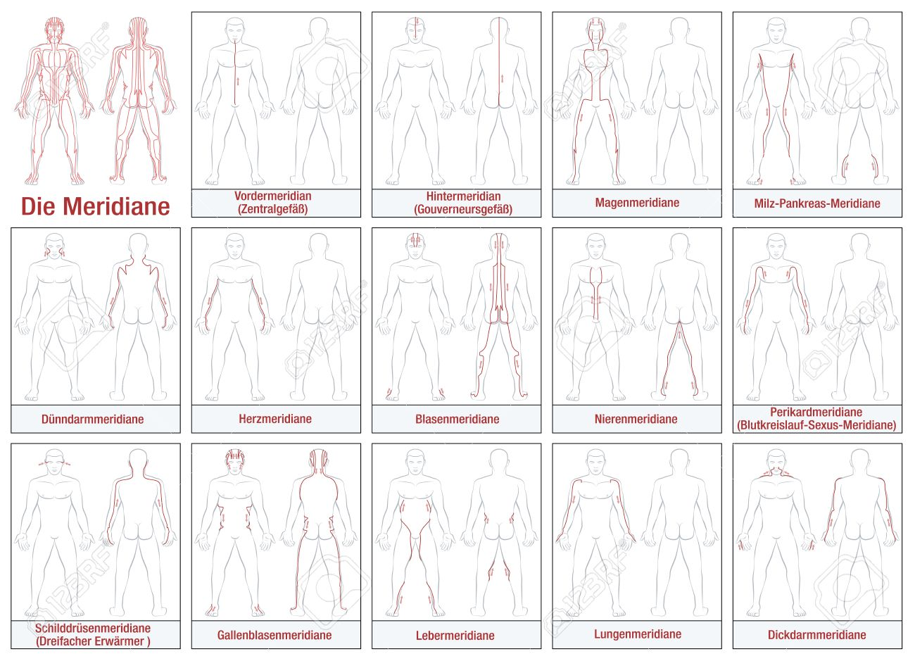 Body meridians - GERMAN LABELING - Schematic diagram with main acupuncture meridians and their directions of flow. Isolated illustration on white background. - 52545876