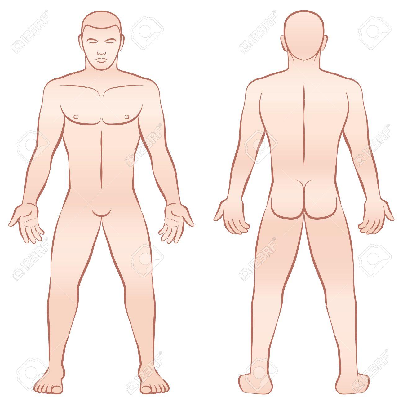 Desnudo Cuerpo Masculino - Vista Frontal En Posición Vertical Y ...