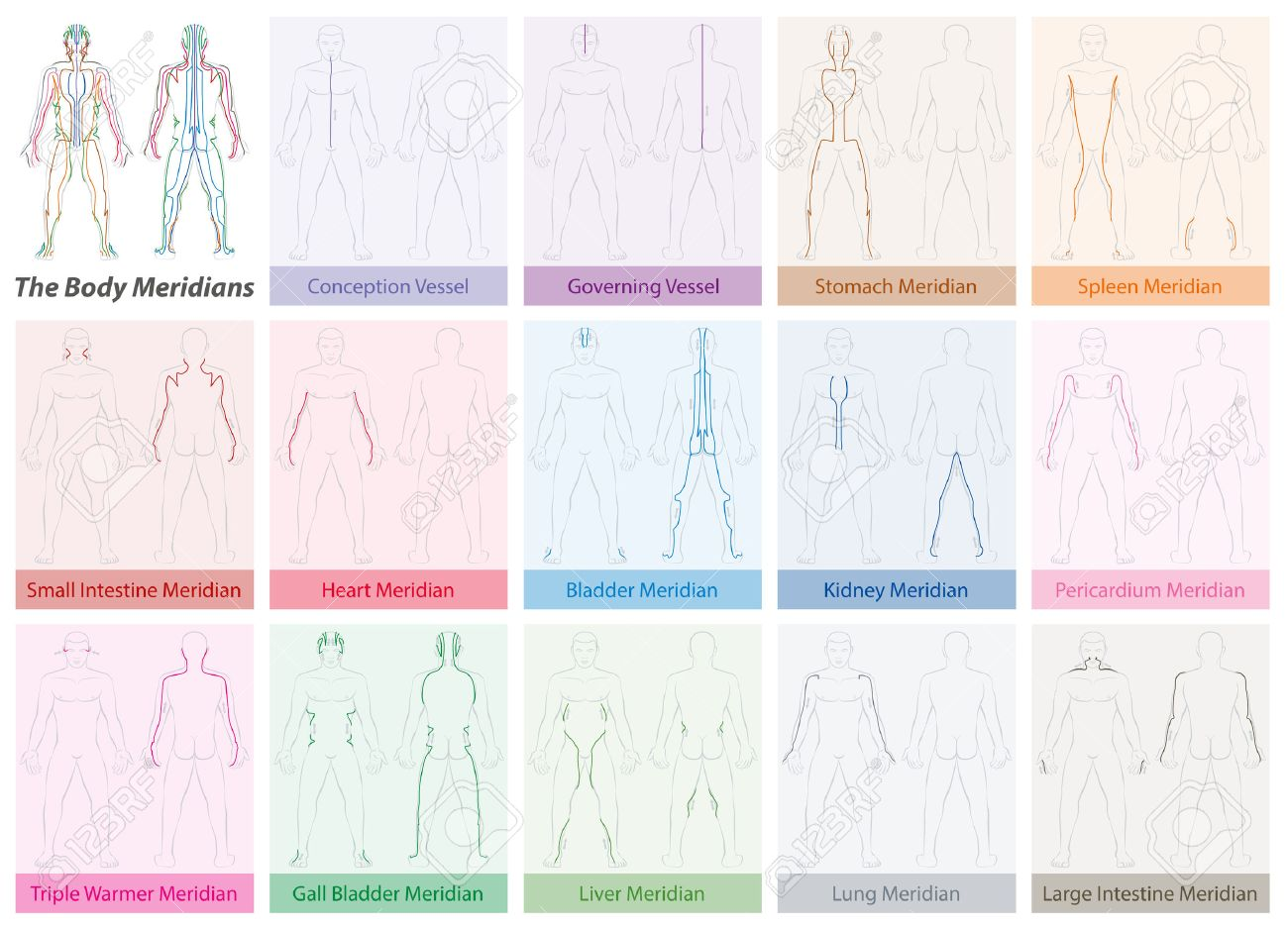 Body meridian chart with names and different colors traditional body meridian chart with names and different colors traditional chinese medicine stock vector nvjuhfo Images
