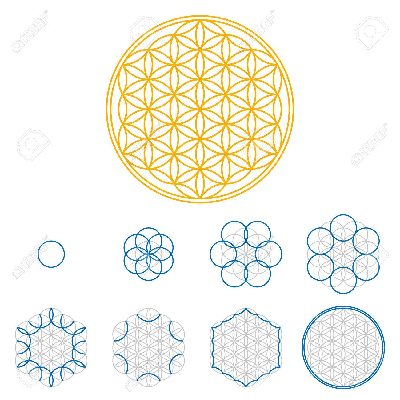 colored flower of life development an ancient symmetrical symbol