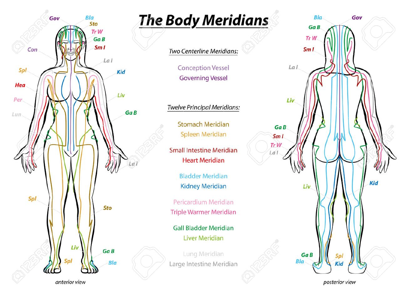 meridian system chart female body with principal and centerline rh 123rf com chinese medicine meridians diagram chinese meridians chart
