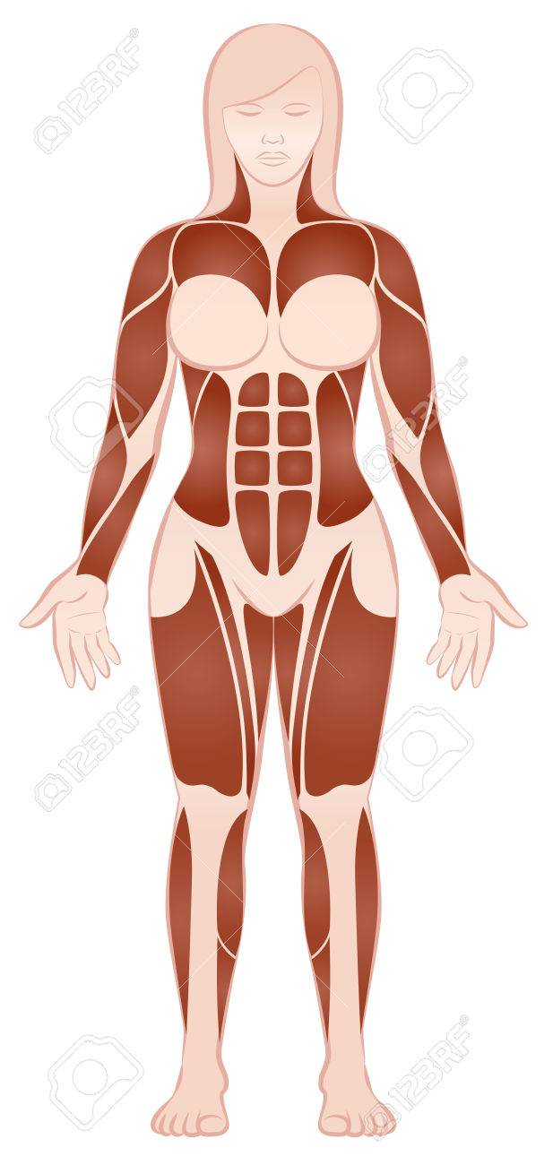 Muscle Groups Of A Muscular Female Body With Pecs Abs Deltoids