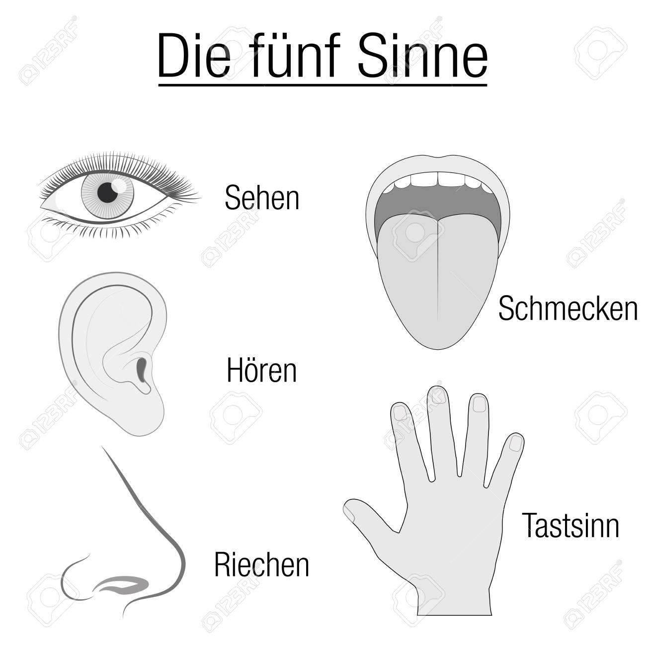 Erfreut Zunge Anatomie Ideen - Physiologie Von Menschlichen ...