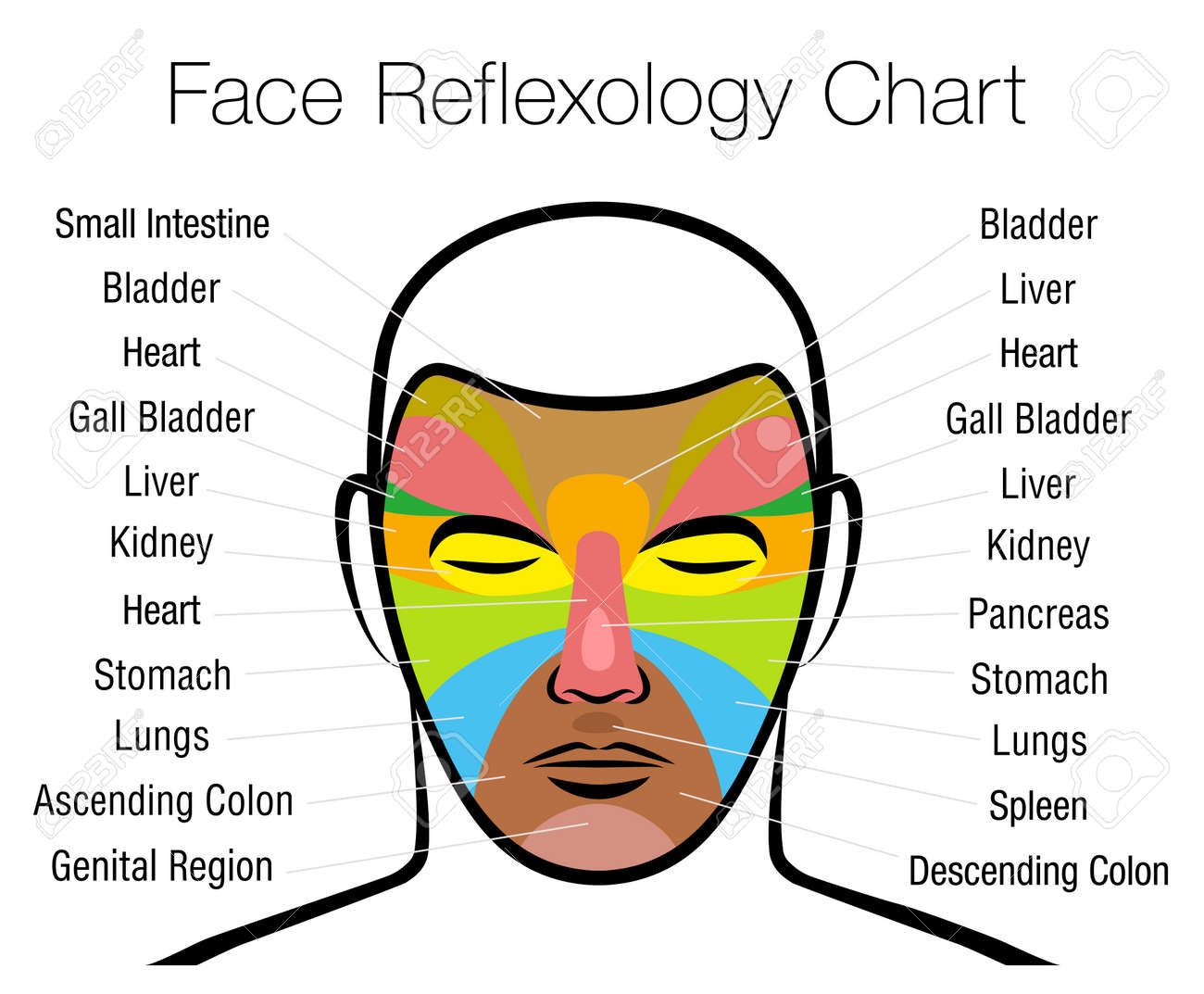 Face reflexology chart. Alternative acupressure and physiotherapy health treatment. Zone massage chart with colored areas and names of internal organs. Colorful face mapping. - 167159665