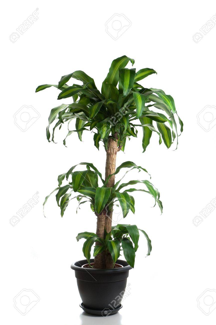 Plant In Home Indoor Plants Stock Photosroyalty Free Indoor Plants Images And .