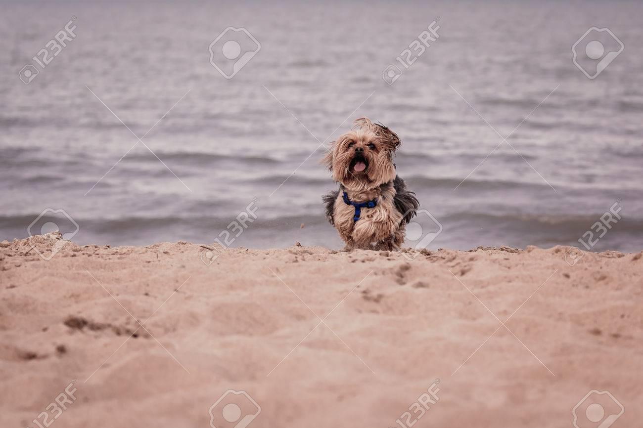 dog beach michigan