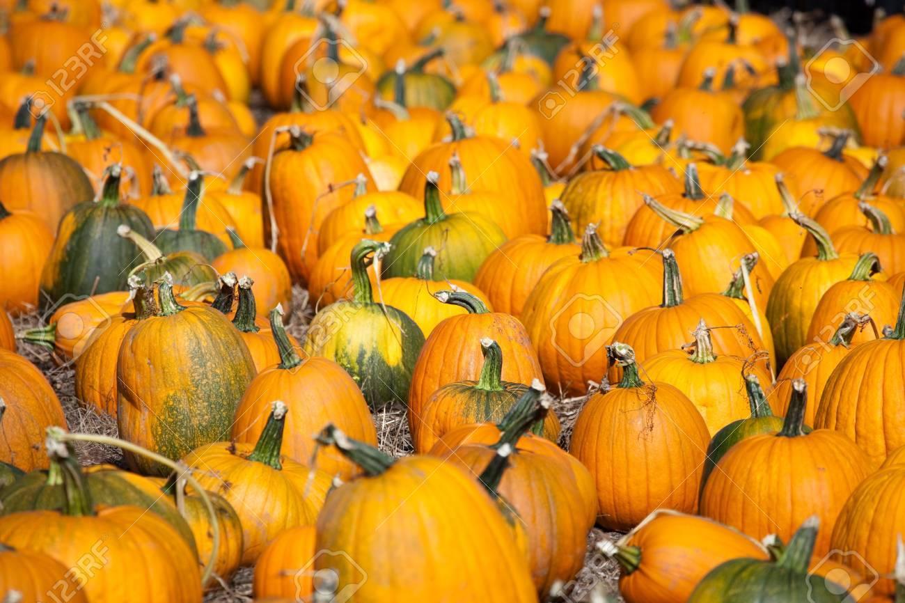 Pumpkins, Santa Cruz in California, USA Stock Photo - 5845627