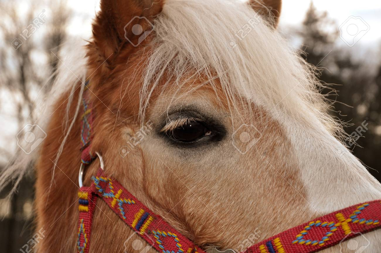 Brown horse with beautiful white mane and eyelashes Stock Photo - 8427843