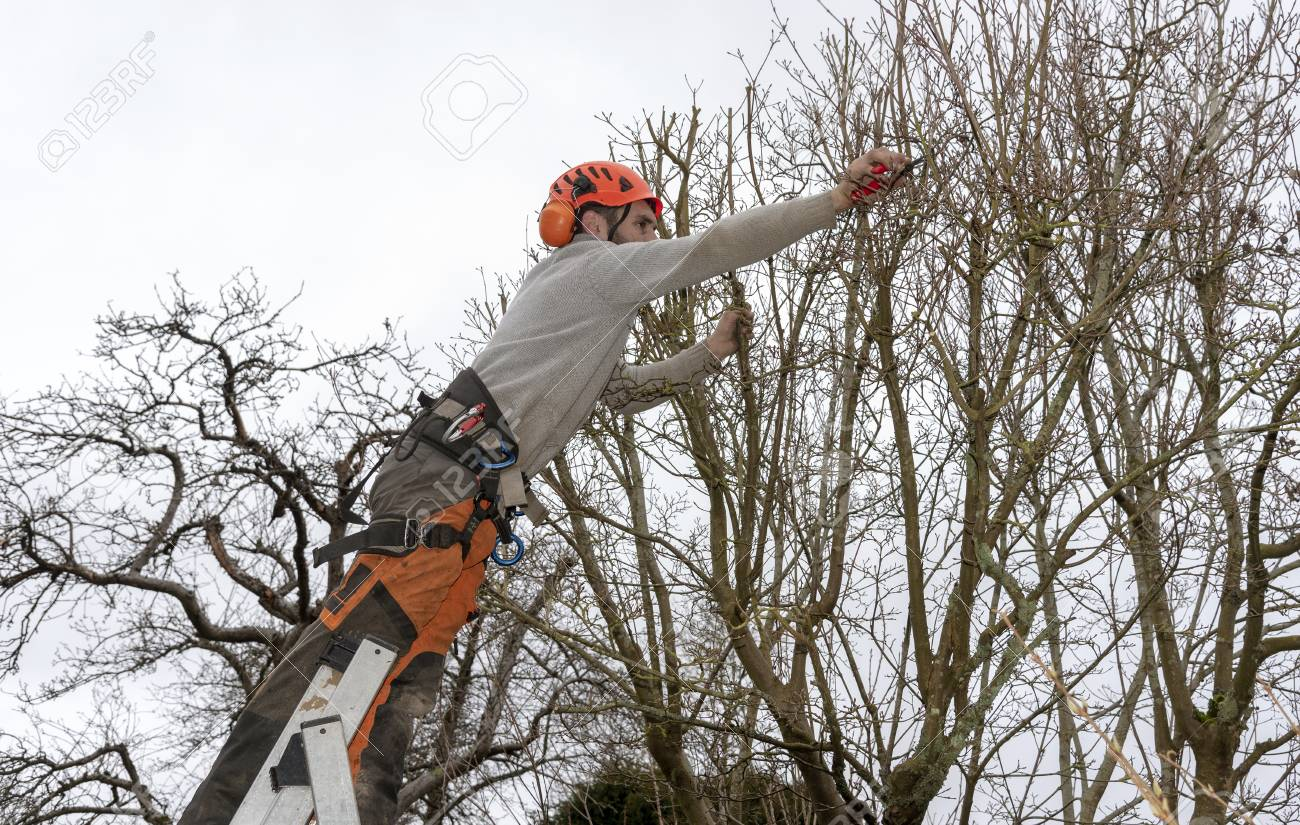 Micheldever Winchester Hampshire England Uk Tree Surgeon Stock Photo Picture And Royalty Free Image Image 119384794
