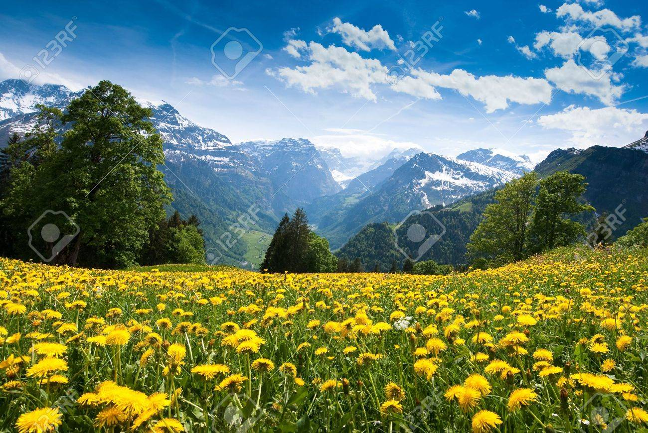 Scenic view from Braunwald (Switzerland) with blossoming field of dandelions in spring. - 4933473