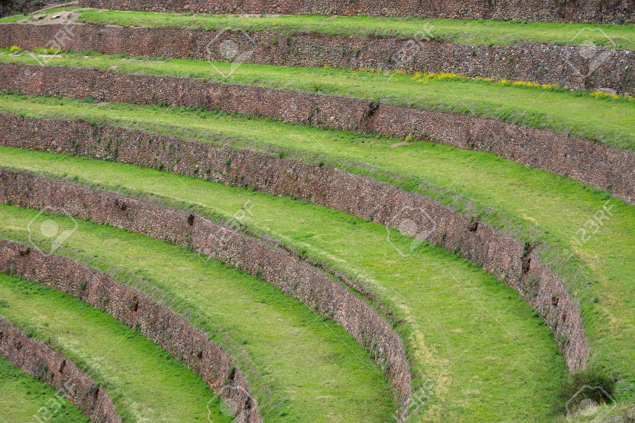 Asentamiento Inca Pisac Perú Cultivos En Terrazas En La Zona Arqueológica De Pisac Perú