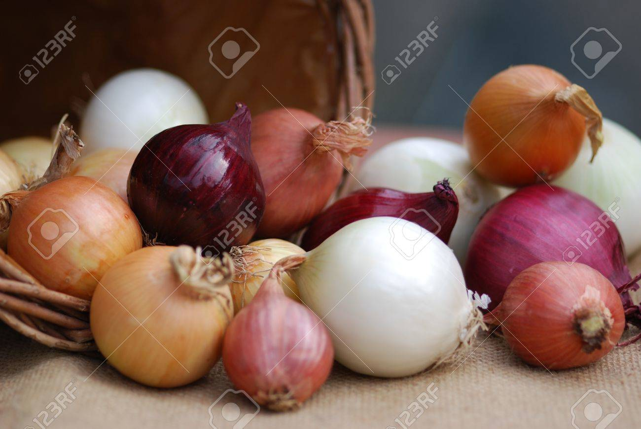 https://previews.123rf.com/images/petrabarz/petrabarz1205/petrabarz120500116/13553327-onion-varieties-Stock-Photo.jpg