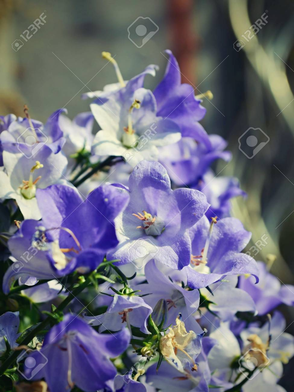 Floral Background Of Spring Flowers Stock Photo Picture And Royalty