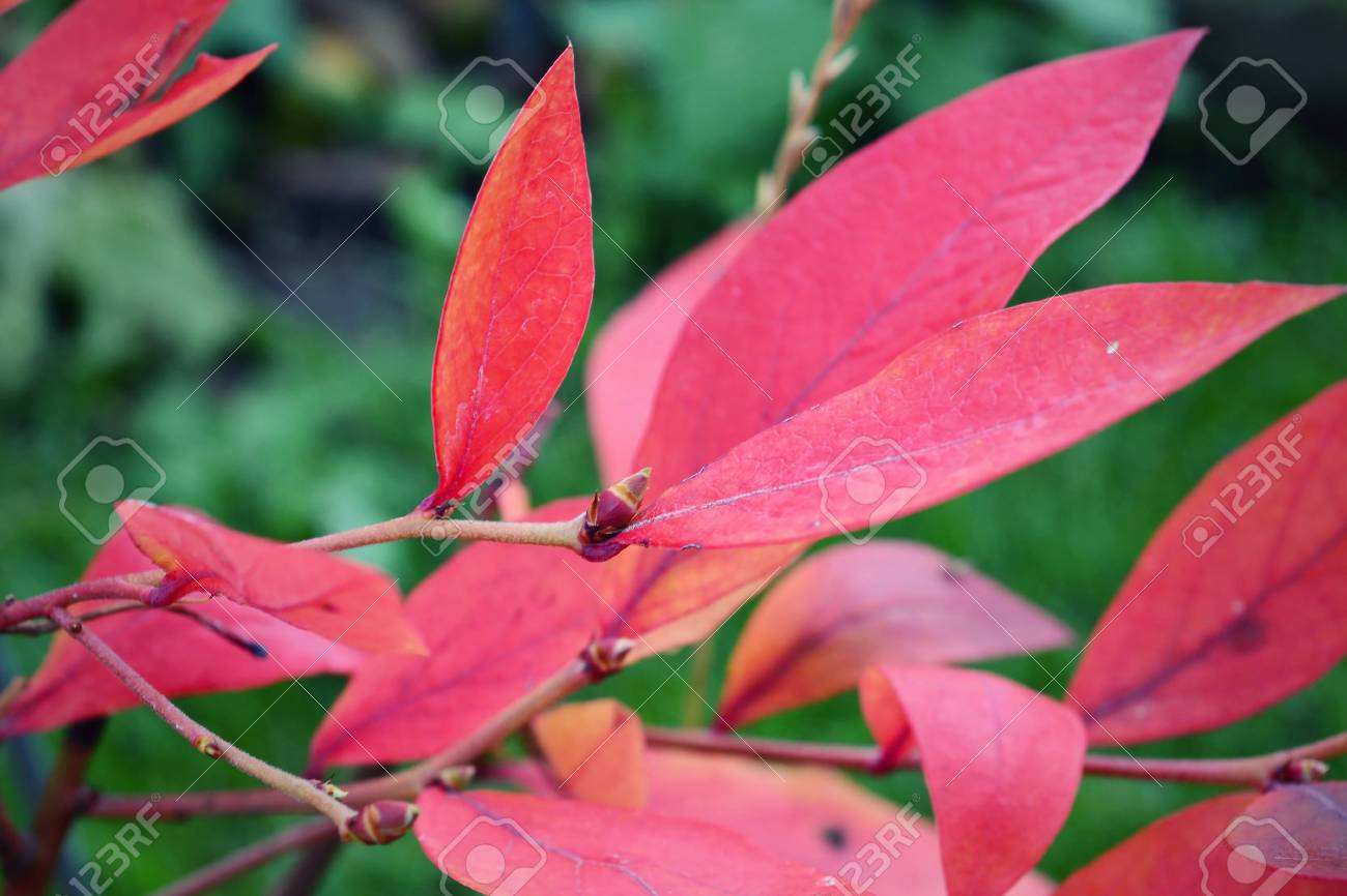 Red leave in autumn - 23272841