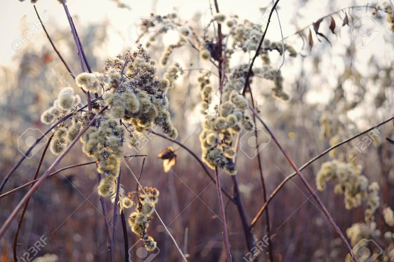 dark reed flower - 24804159