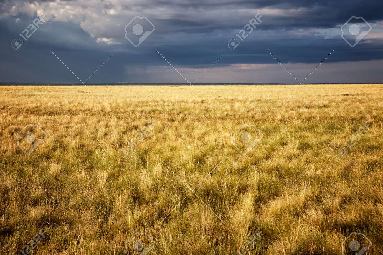 Great Kazakh steppe, Kazakhstan, Central Asia - 56303597