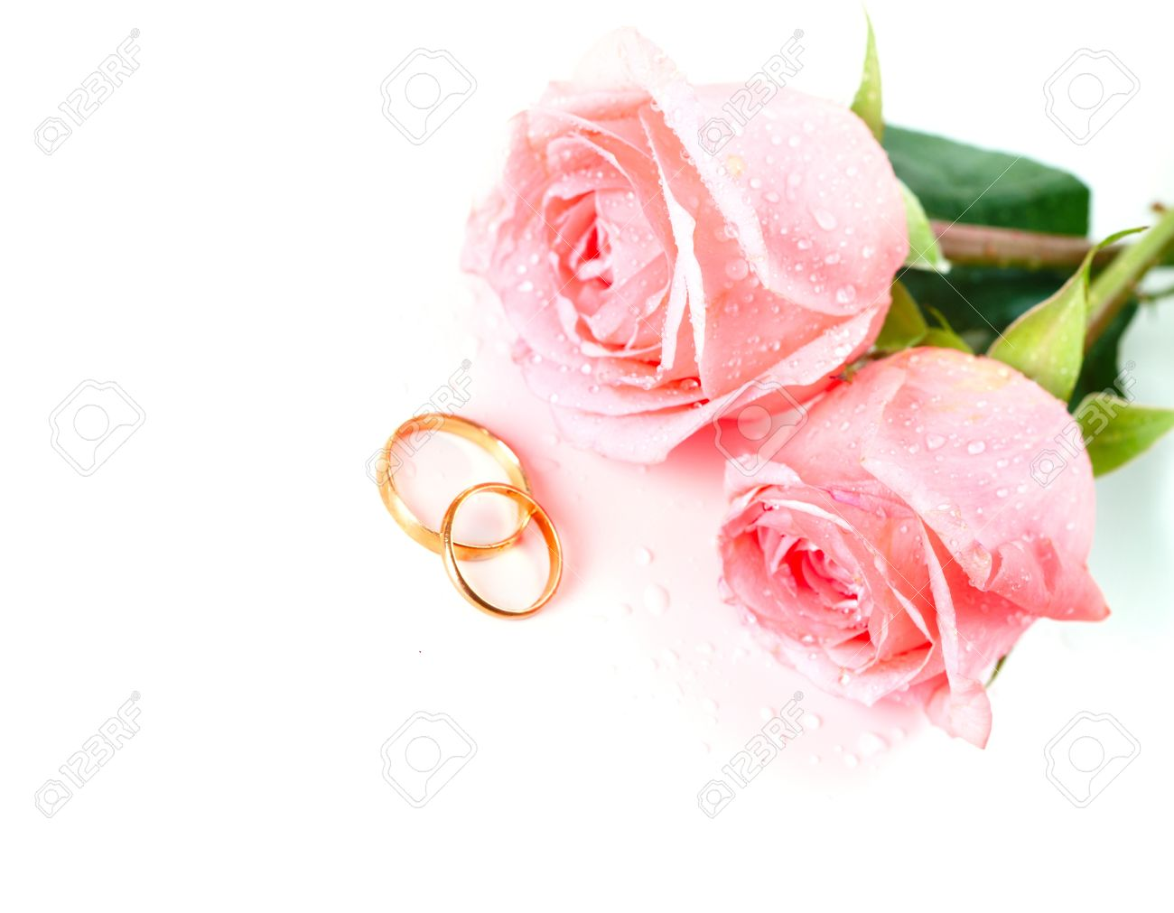 Roses Flowers And Two Marriage Wedding Rings. Over White Background ...