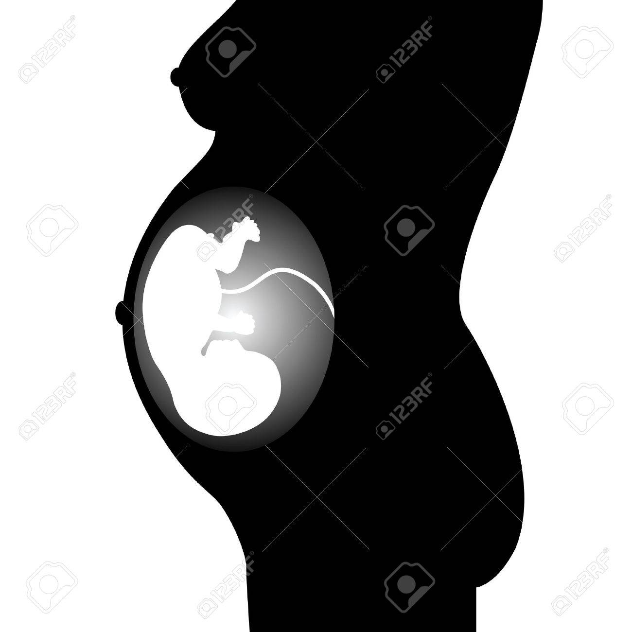 Silhouette of the fetus on a white background Stock Vector - 10732084