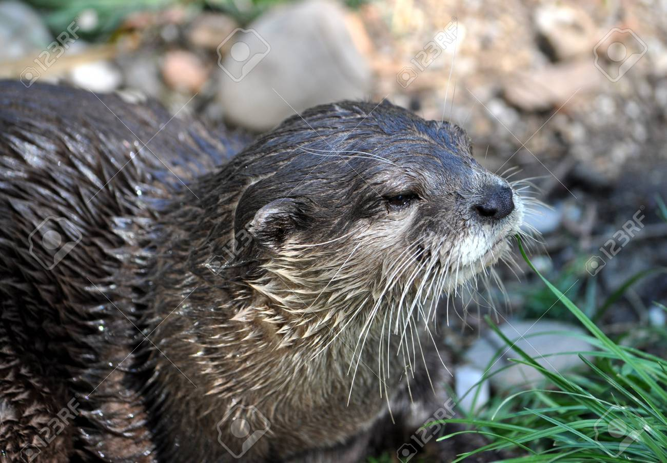 view on river otters - 25108241